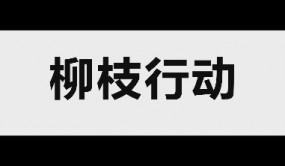 柳枝行动平台发布宣传片